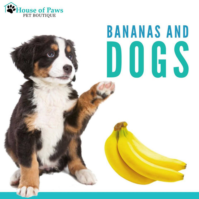 Are bananas safe for dogs?