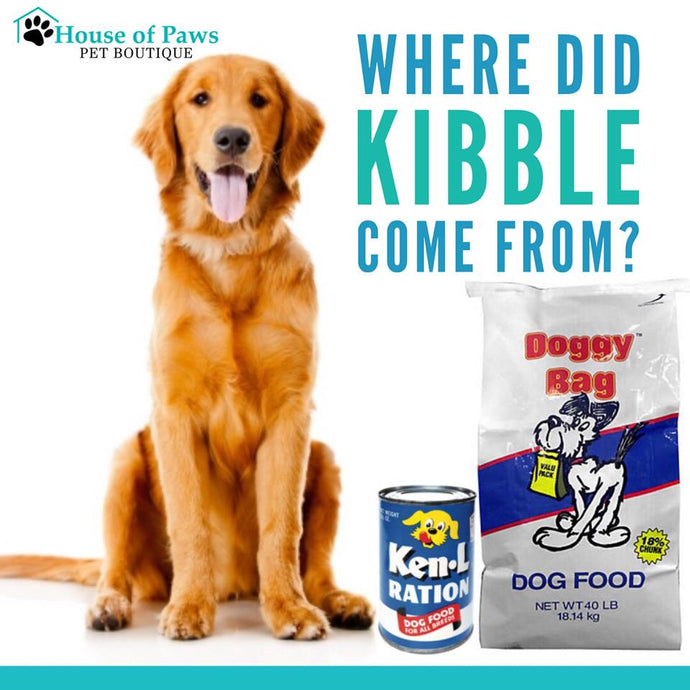 Where did kibble come from?