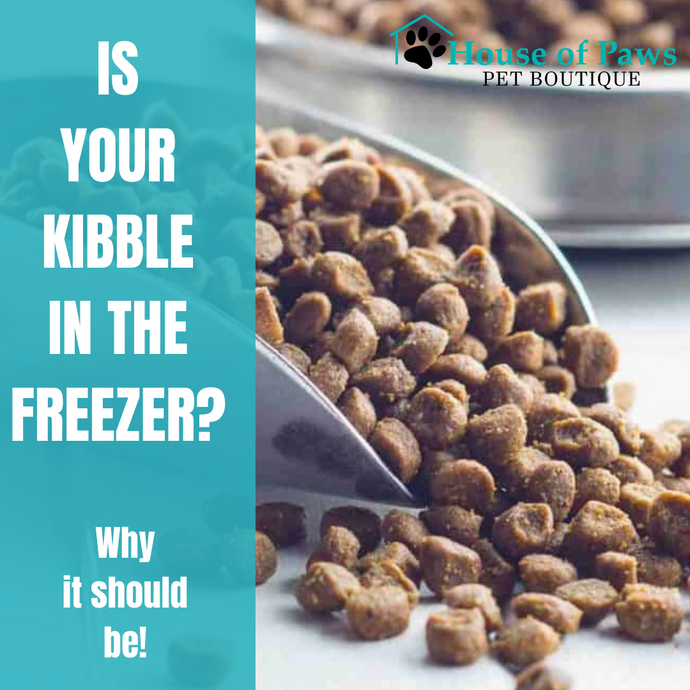 Why You Want to Freeze Your Kibble