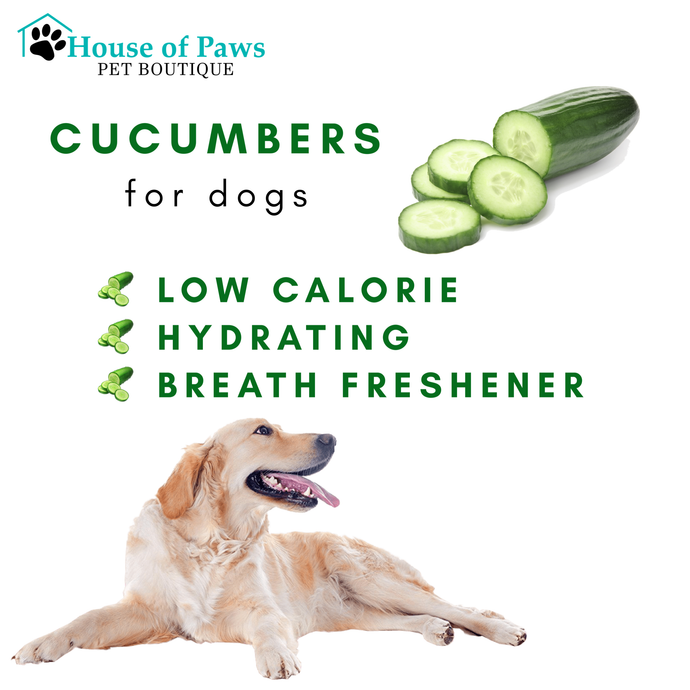 Give Your Pup Some Cucumbers