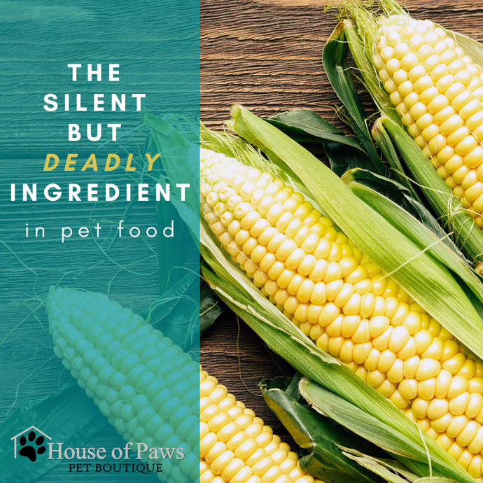 Corn! The Silent but Deadly Ingredient in Pet Food!