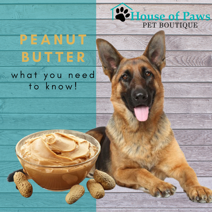 How Safe is Peanut Butter for My Dog?
