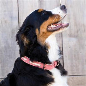 "Shedrow K9 Banyon II Laced Leather Collar 22"" Faded Red"