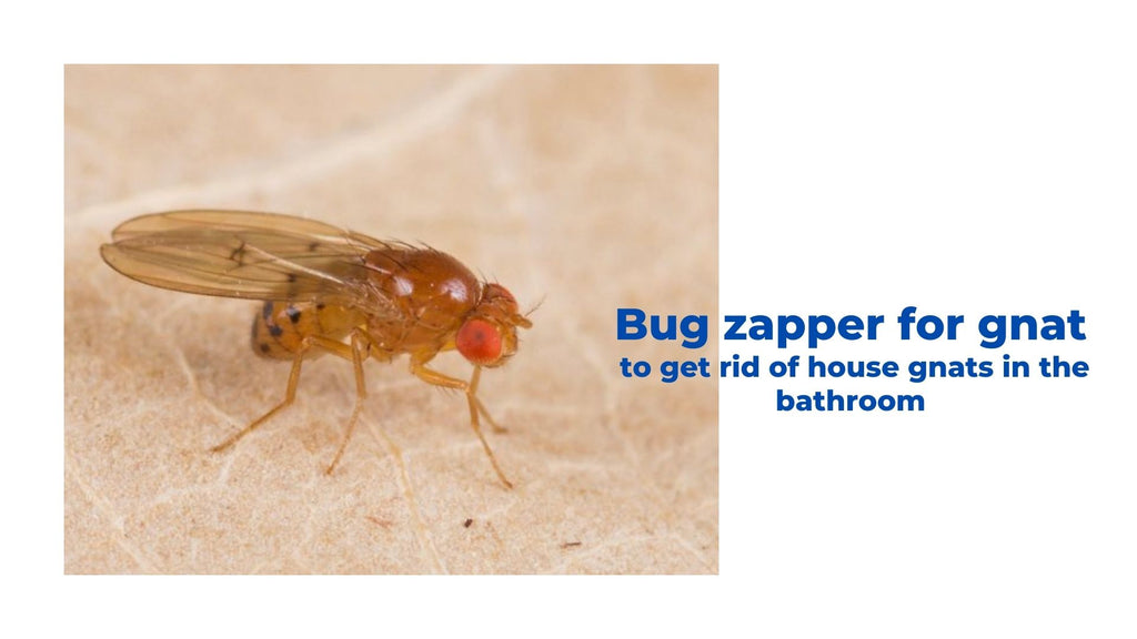 Image-bug-zapper-for-gnat-to-get-rid-of-house-gnats-in-the-bathroom