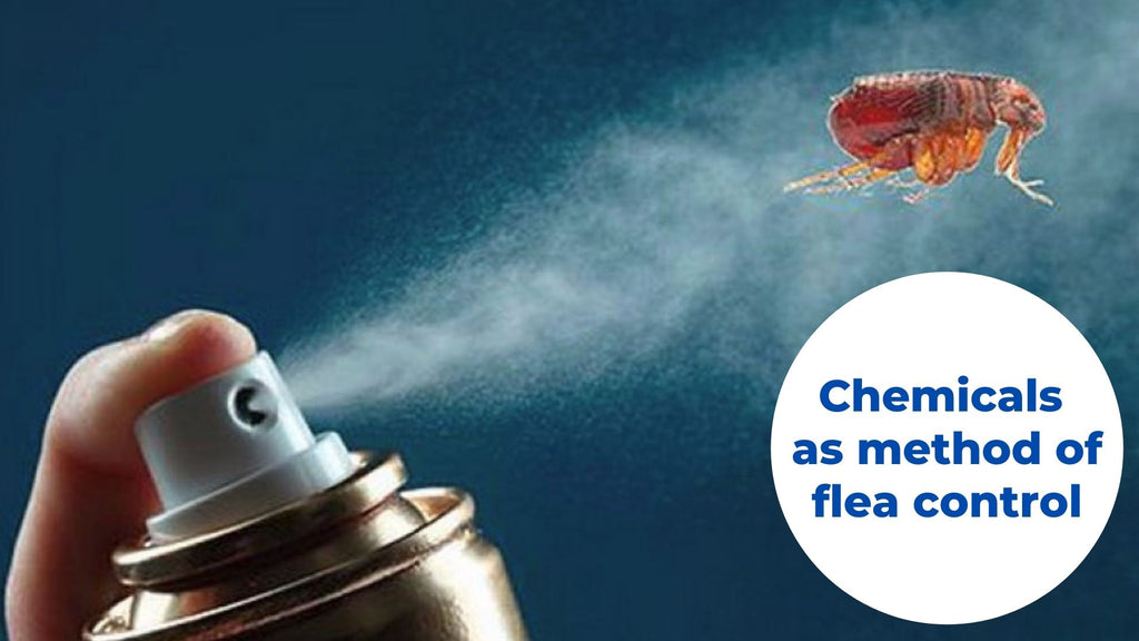 Image-chemicals-as-method-of-flea-control