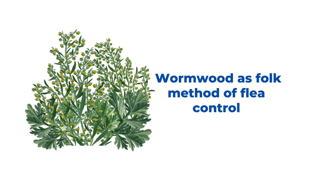 Image-wormwood-Image-as folk-method-of-flea-control