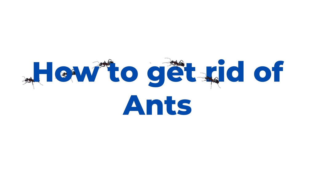 image-How-to-get-rid-of-Ants