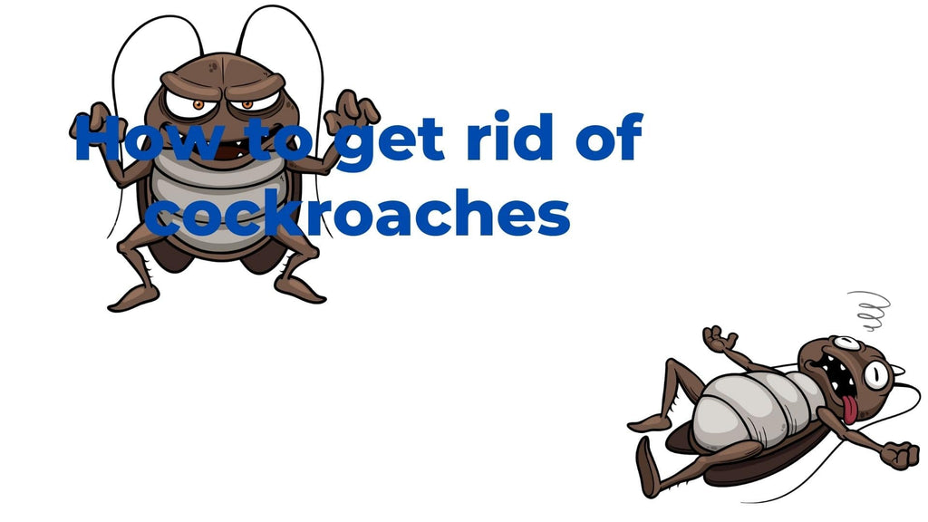 image-How-to-get-rid-of-cockroaches