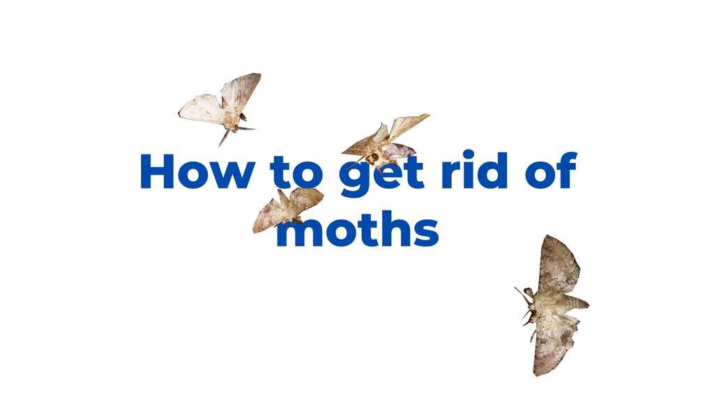 image-How-to-get-rid-of-moths