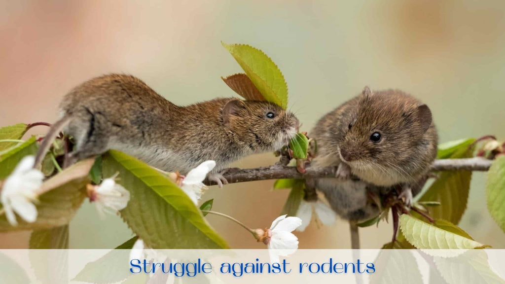 image-best-rodent-repellent