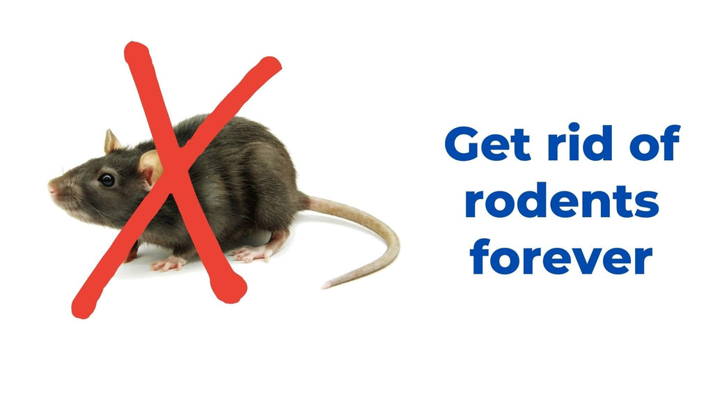 image-get-rid-of-rodents-forever