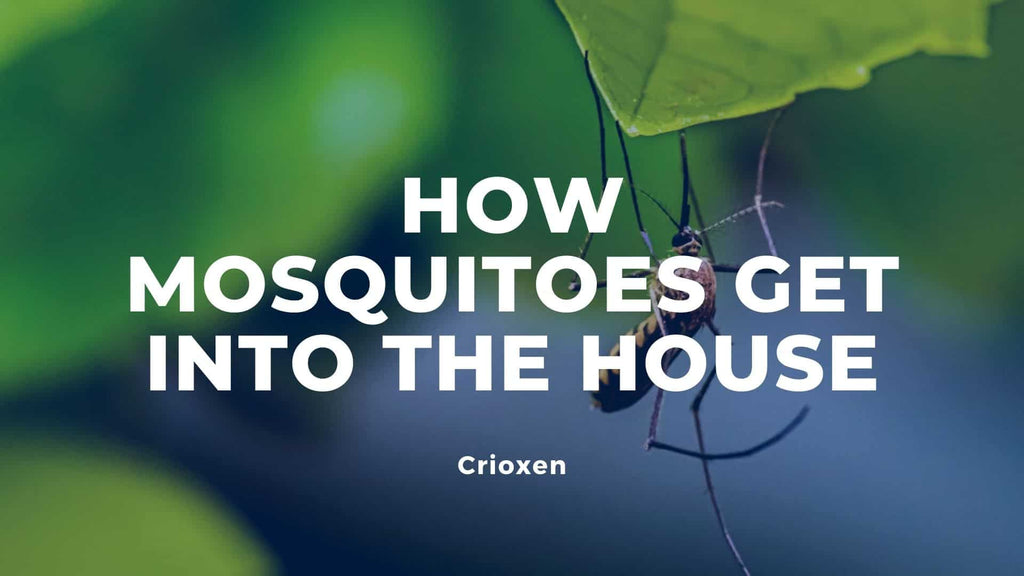 image-how-mosquitoes-get-into-the-house