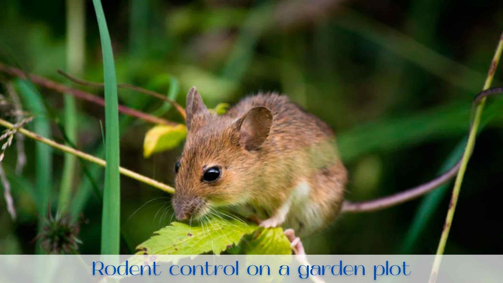 image-outdoor-rodent-repellent