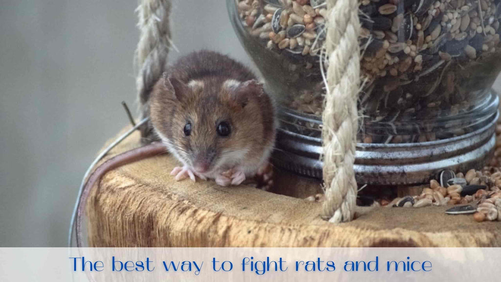 image-rodent-control
