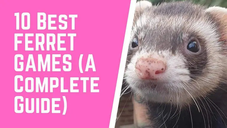 10 Best Games For Your Ferret