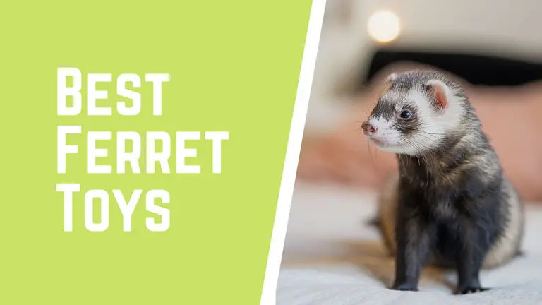 Top 5 Best Ferret Toys 2020