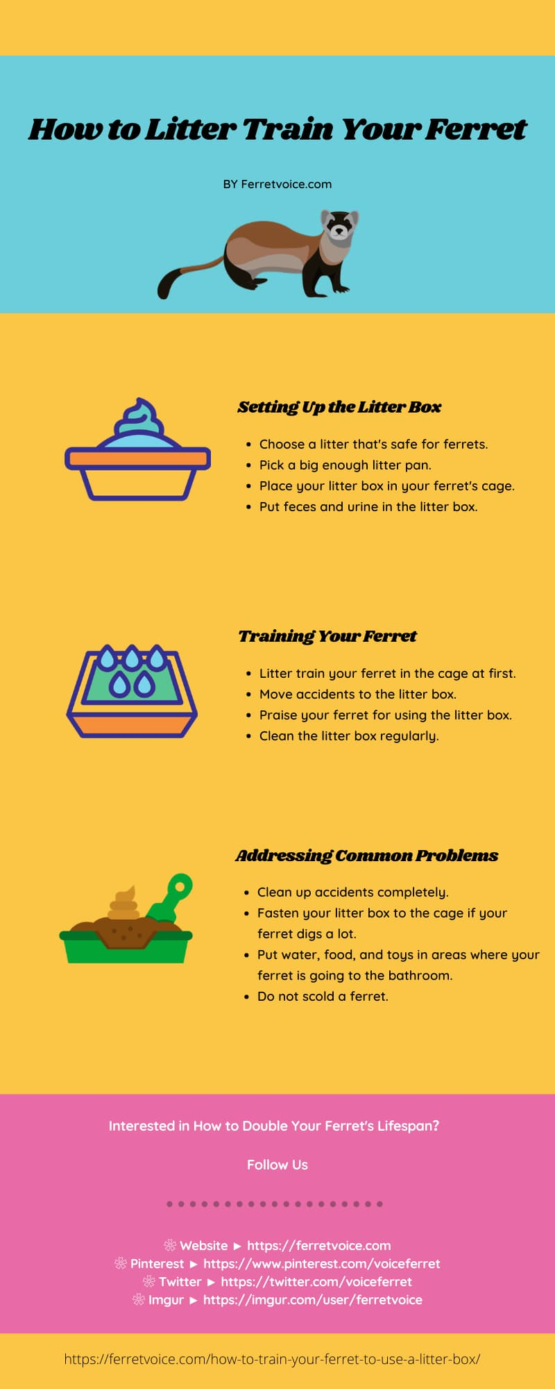 How to Litter Train Your Ferret Infographic