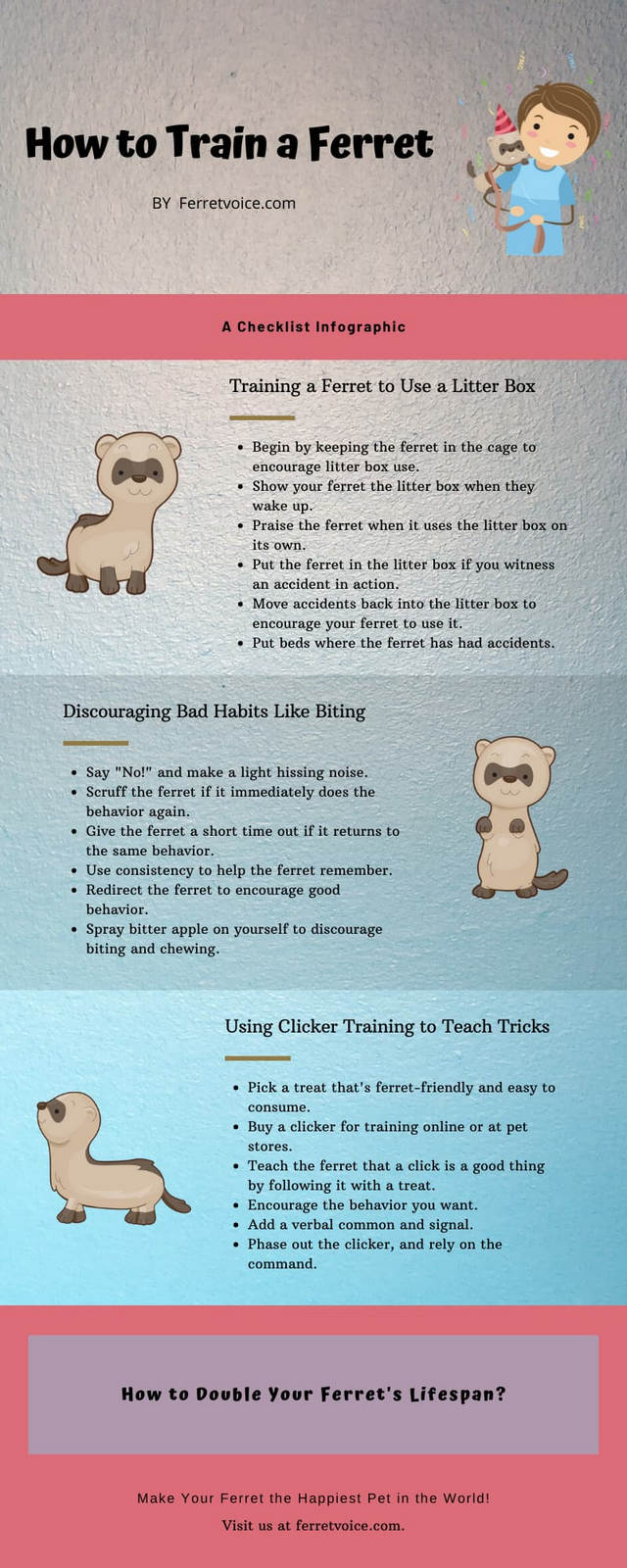 How to Train a Ferret Infographic