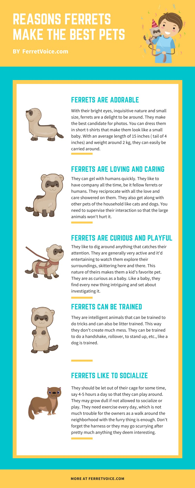 reasons to get a ferret