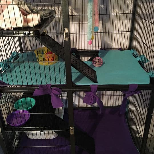 Are ferret cages good for rats?