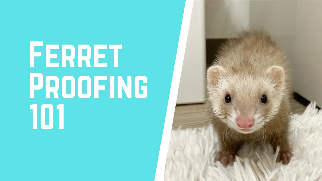 what is ferret proofing