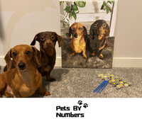 Pets By Numbers | Custom Paint By Numbers Kits