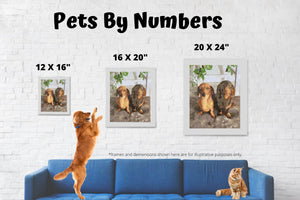 Custom Paint By Numbers Kit - Pets By Numbers