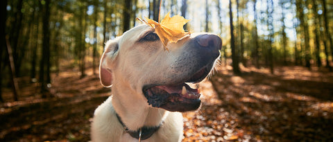 Leaf on dog's nose