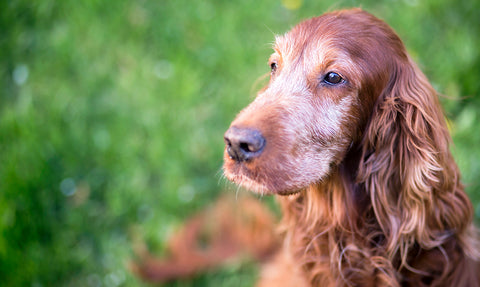 How CBD Helps Fight Off Symptoms of Aging in Pets