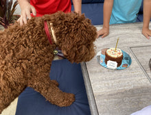 Load image into Gallery viewer, dog birthday cake hk