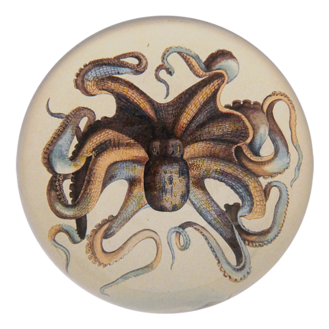 Octopus Paperweight by John Derian