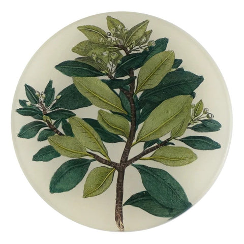 Winter Cinnamon Plate by John Derian