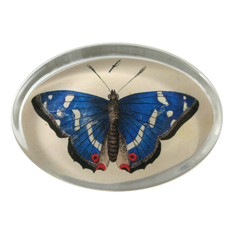 Blue Butterfly Paperweight by John Derian