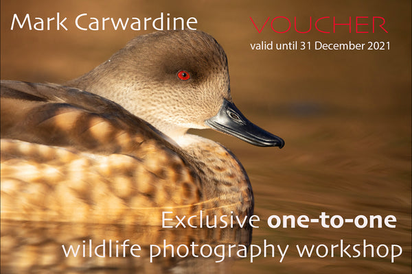 One-to-one Wildlife Photography Workshop, with Mark