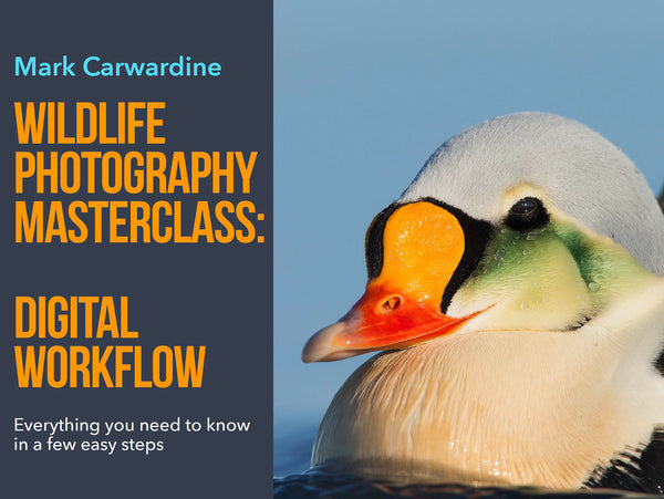 Wildlife Photography Masterclass: Digital Workflow