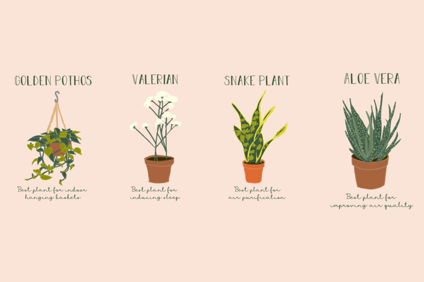 The 10 Best Plants for Your Bedroom