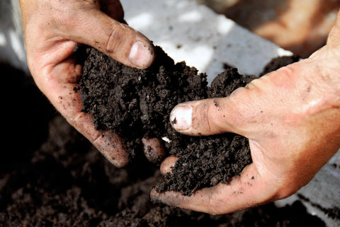 Don't Treat Your Soil Like Dirt!