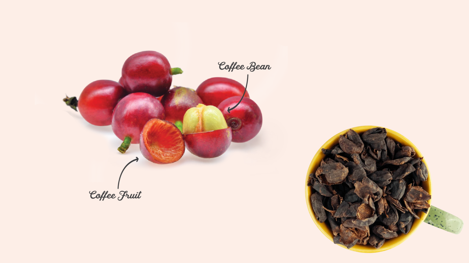 Tease Tea Coffee Cherry Tea Cascara