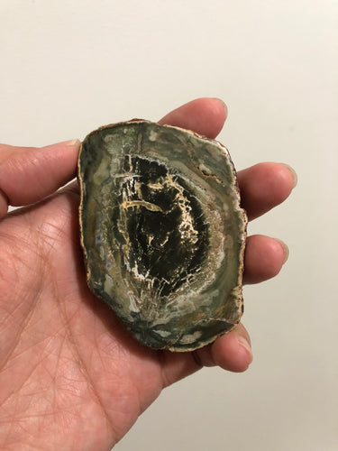 Petrified Wood Slab 109g