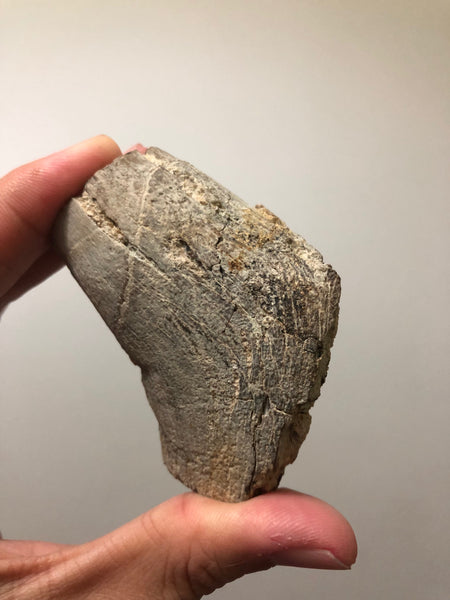 Petrified Wood Raw Specimen 194g