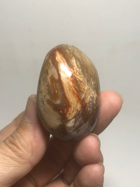 Petrified Wood Palm Stones 57g