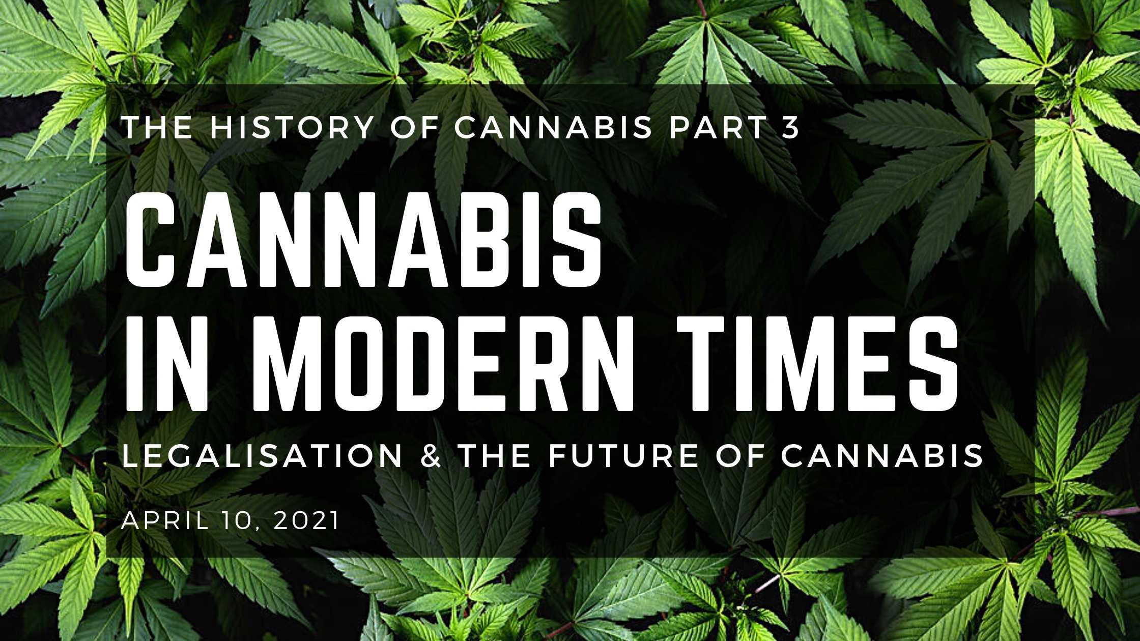 Cannabis in Modern Times: Legalisation and The Future of Cannabis - Herbaleyes