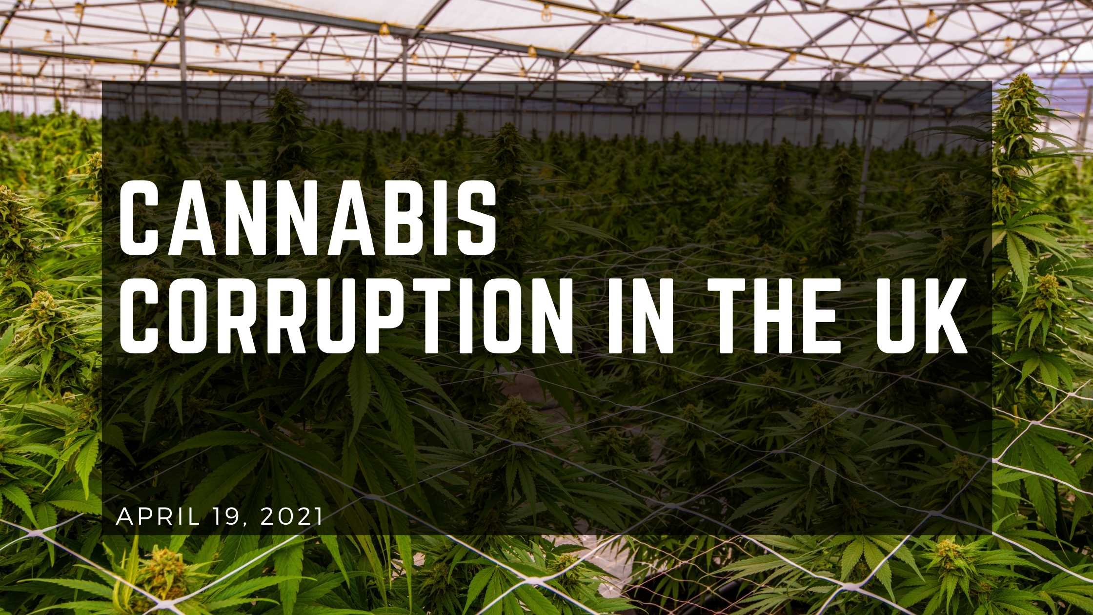 Cannabis Corruption In The UK - HERBALEYES