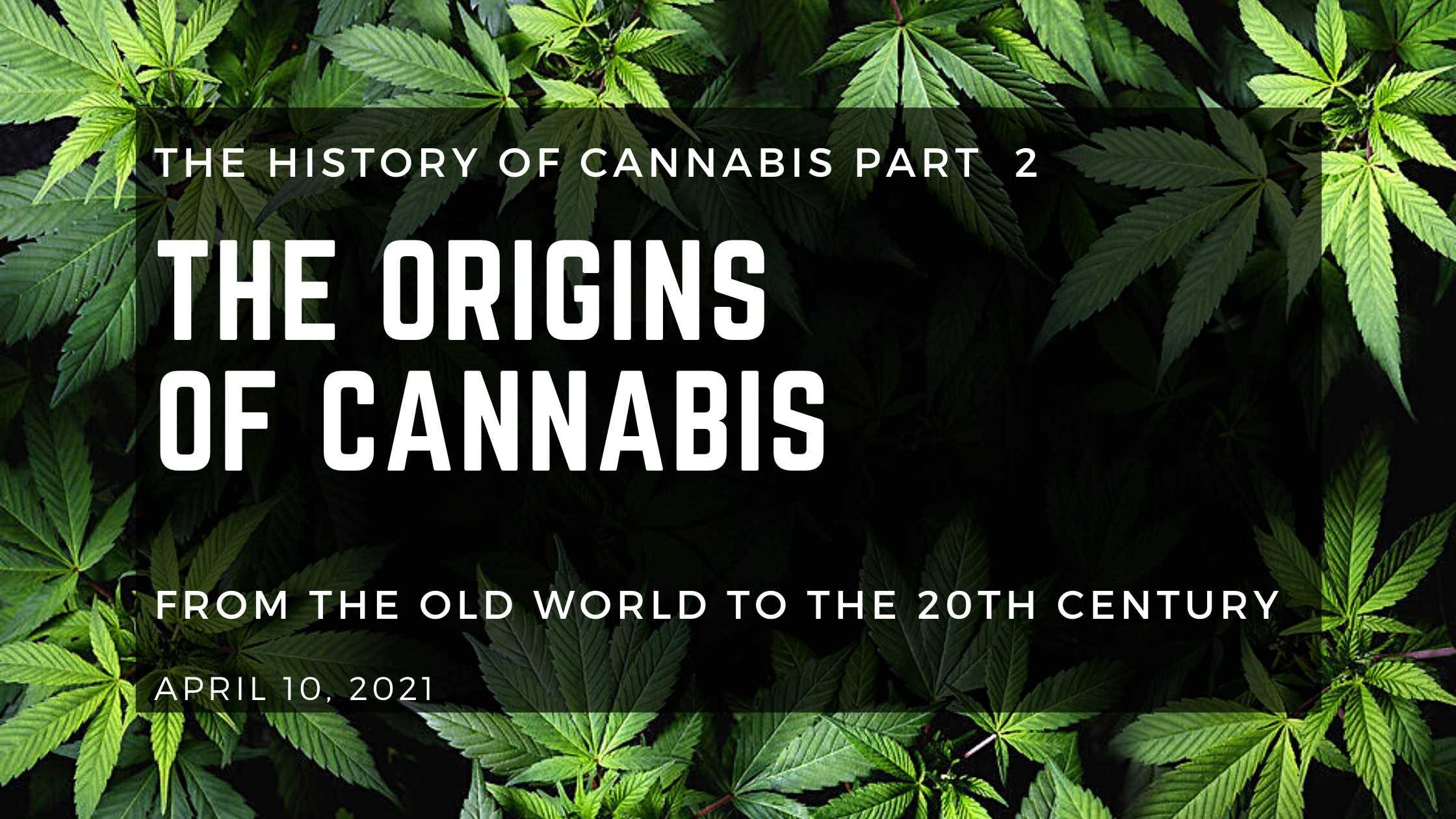 The Origins of Cannabis: From the Old World to the 20th Century - Herbaleyes