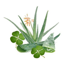 Load image into Gallery viewer, Aloe & Green Clover