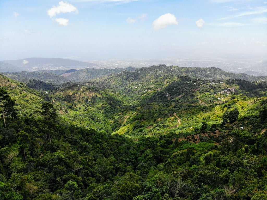 Blue Mountains of Jamaica, Lots of green trees and medium sized mountains all the way to the horizon