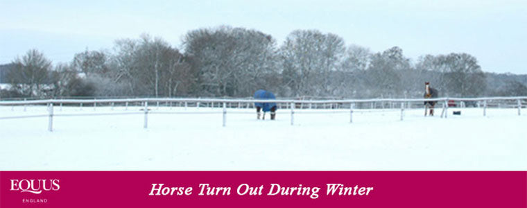 horse winter turnout