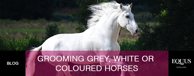 Grooming grey, white or coloured horses