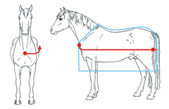 How to measure a horse for a rug