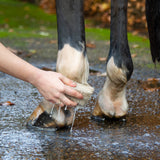 See Change Horse Shampoo Bar Being Used On Horse's Legs